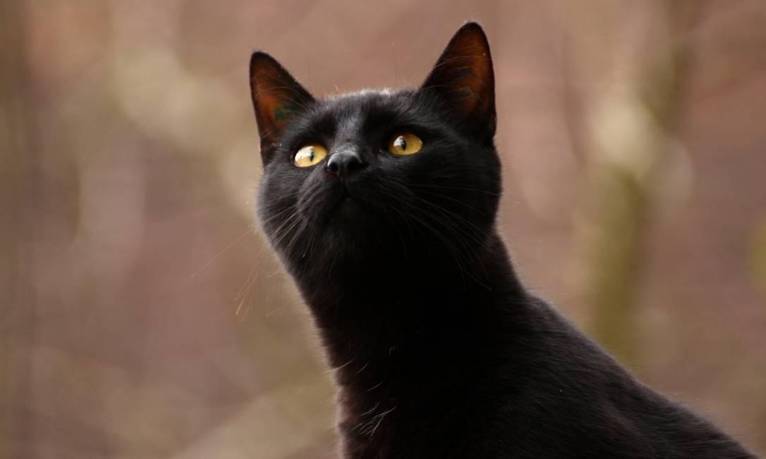 Gatos contraem e transmitem Covid-19, mas adoecem pouco, sugere estudo